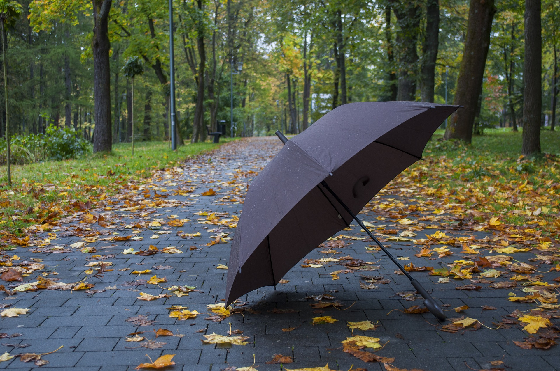umbrella insurance, excess insurance, Zein Insurance Services Inc, insurance, fall, autumn,